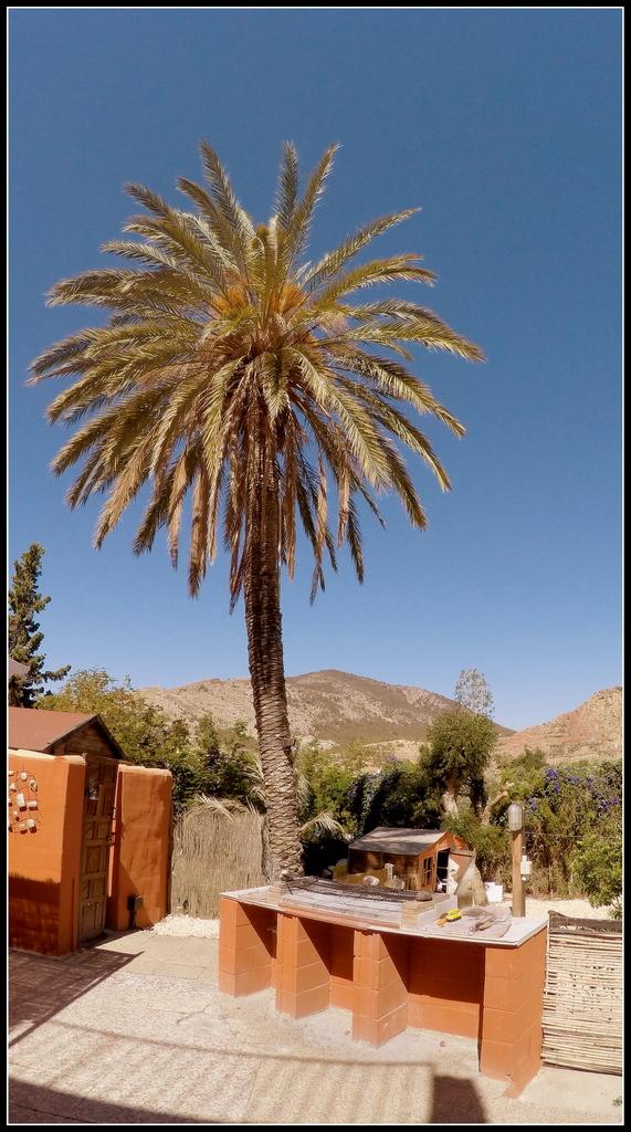 BBQ under a palm tree